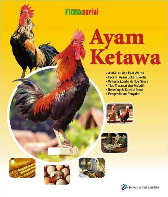 cover-ayam-ketawa-(siap)